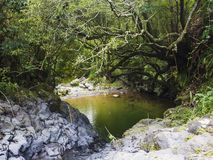Small green pond with hanging rope swing at Lush green tropical forest with rock and moss covered vegetaion on footpath. Hiking trail on Sao Miguel island stock photo