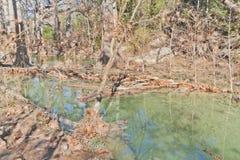 Small green river at Hamilton Pool Stock Photo