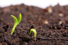 Small green seedling Stock Photo