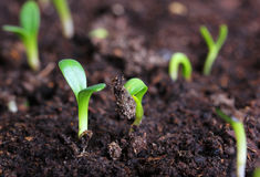 Small green seedling royalty free stock photo