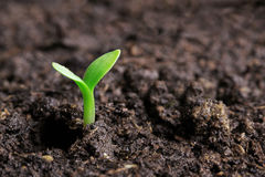 Small green seedling Stock Photography