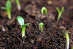 Small green seedling Stock Photos