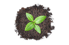 Small green seedling growing from heap of soil Stock Photo
