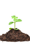Small green seedling growing from soil Stock Photography