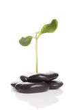 Small green sprout among stones Royalty Free Stock Photo