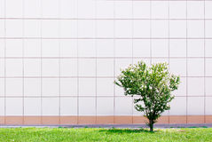 Small green tree Stock Images