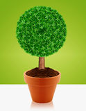 Small green tree Stock Photo