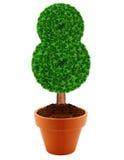 Small green tree Royalty Free Stock Photo