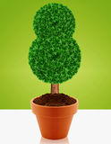 Small green tree Stock Photography