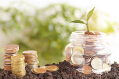 Small green tree growth up on plastic jars and staced money on soil,. Concept in save and step by step of business, finance, economy and account bank Stock Photos