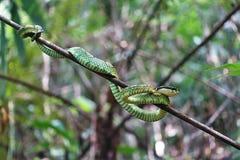 Small tree snake ready to hunt
