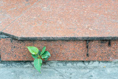 The small green trees on the red stone sidewalk Stock Photos