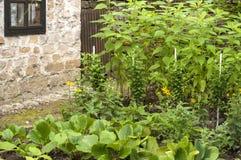 Small green vegetable garden Stock Images