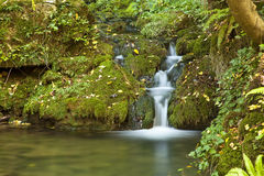 Small Green Waterfall Stock Photos