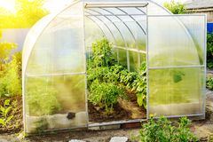 The small greenhouse in a garden with the grown-up tomatoes, cucumbers and sweet pepper. Conception of healthy food and royalty free stock images