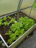 Small greenhouse Stock Photos