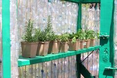 Small greenhouse stock image