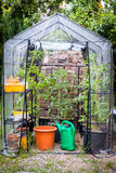 Small greenhouse Stock Images