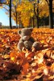 Small grey bear Royalty Free Stock Photography