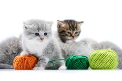 Small grey fluffy adorable kitten is playing with orange yarn ball while other kitties are playing with green wool balls stock photography
