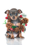 Small grey puppy Stock Images