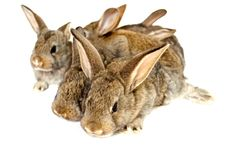 Small grey rabbits Stock Images