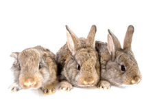 Small grey rabbits. On a white background Stock Images