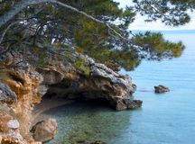 A small grotto under the pines. Adriatic Sea, a small grotto under the pines Royalty Free Stock Photos