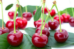 Small group cherry on a petal. More cherry on a petal  on white background Stock Images