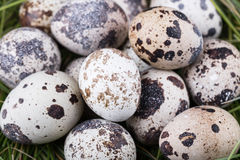 Small group of dappled quail eggs. Close-up shot Stock Photos