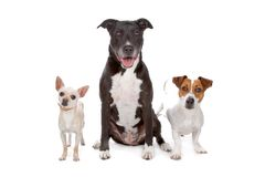 Small group of dogs. Isolated on a white background Stock Photos