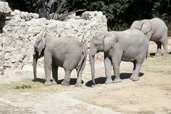 Elephants family in Zoo Stock Images