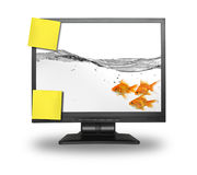 Small group of goldfish inside LCD screen Stock Photos