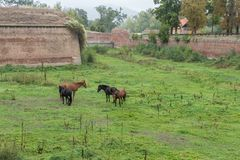 Group od horses in the terezin fort royalty free stock photography