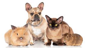 Small group of pets. Together on white Stock Photos