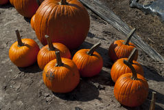 Small group of pumpkins. Different size and shape pumpkins are grouped together on the ground Royalty Free Stock Photo