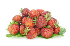 Small group of the real fresh garden strawberry Royalty Free Stock Photography