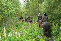 Horseback riding in the forest, Glenorchy, Queenstown, South Island, New Zealand stock photos
