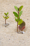 Small growing trees stock image