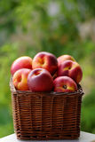 Small hamper of fruit. With red peaches Royalty Free Stock Photos