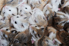 Small hamsters Stock Photography