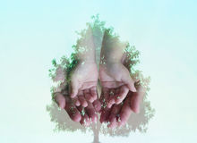 Small hand on big hand combined with a big tree Royalty Free Stock Photo