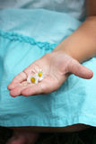 A small hand with small flowers. Close up of a childs hand with some small daisies Royalty Free Stock Photography
