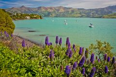 Small harbour of Akaroa on peninsula near Christchurch, New Zealand. Little seaside community, beatiful gardens on the beach, clear blue water royalty free stock images