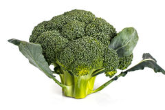 Small head of broccoli on a white background Stock Photography