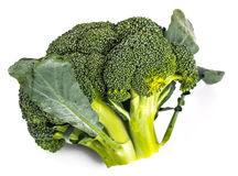 Small head of broccoli on a white background Royalty Free Stock Photography