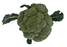 Small head of broccoli on a white background Stock Photo