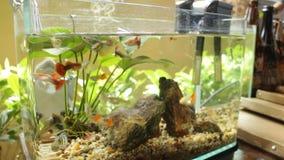 Small healthy fish in tropical community aquarium stock video