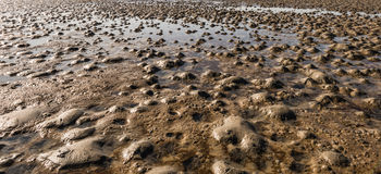 Closeup of a muddy beach at low tide Royalty Free Stock Images