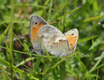 Small Heath Royalty Free Stock Images
